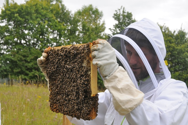 Beekeeper using thermostar hives at Southill Community Solar - project funded by The Naturesave Trust