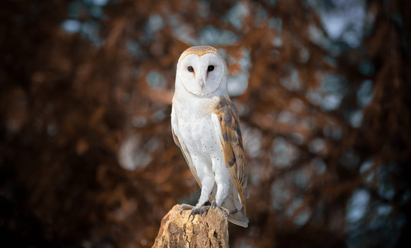 Nest Box Scheme for Suffolk Owl Sanctuary funded by The Naturesave Trust